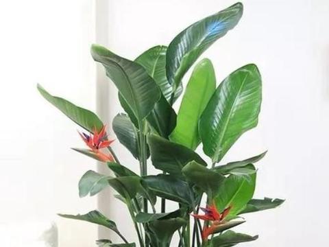 家里阳台必养此款花卉,耐寒易打理,颜色丰富,给你一片花海!