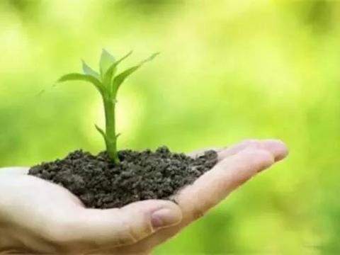 微生物肥料在绿色农业中的应用与创新