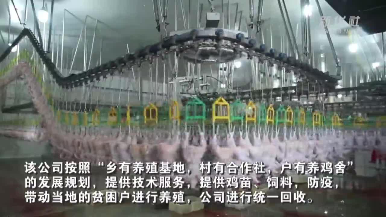 新疆墨玉县:引进龙头企业 助力脱贫致富