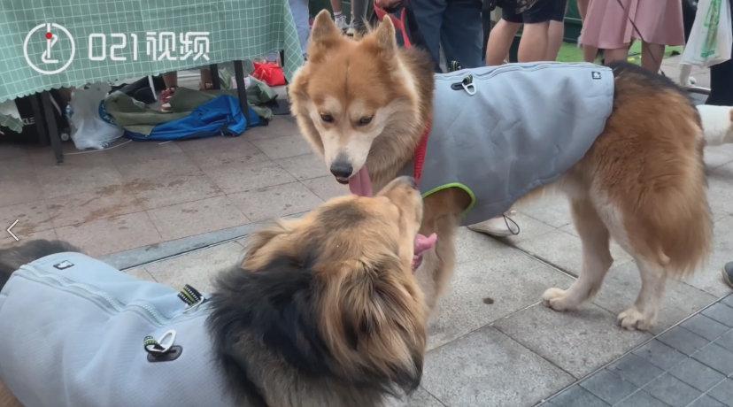 暖!狗狗安慰患癫痫伙伴:发病时会用手拍拍它安抚它