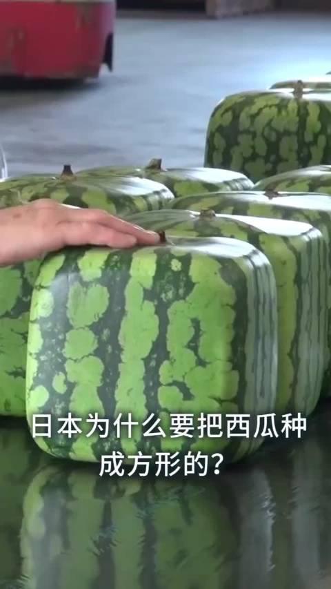 日本为什么要把西瓜种成方形的?