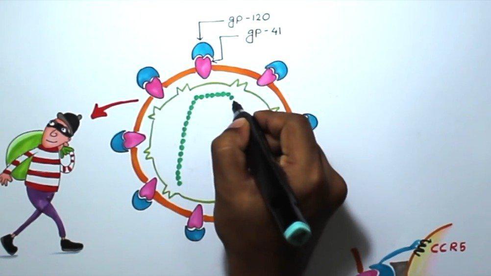 艾滋病毒的基本结构和临床重要性
