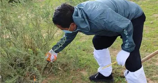 内蒙古达茂旗24个鼠疫疫区完成处置并通过验收