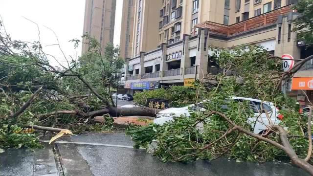 10时许,漳州龙海市石码镇街道树木,电线杆倒塌,影响车辆通行……