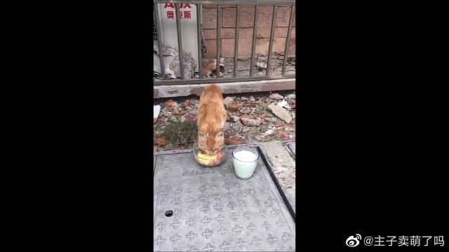 偶遇流浪猫,好心妹子回家给做了吃的送来……