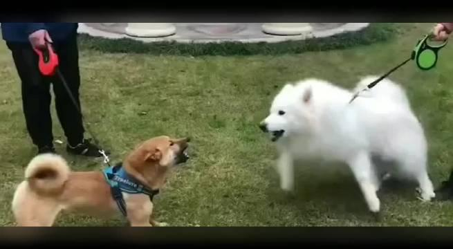 看看狗的是多么的快乐,还是喜欢动物,不喜欢人。光晕了!