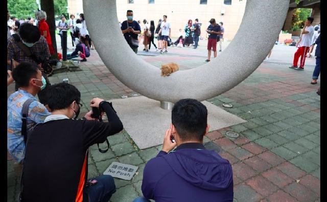 猫咪趴在雕塑上面,路人驻足给它拍照,猫:膜拜吧,愚蠢的人类
