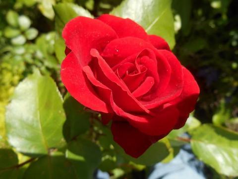 8月份期间,缘分桃花非常饱满,一心一意对待爱情的四个生肖!