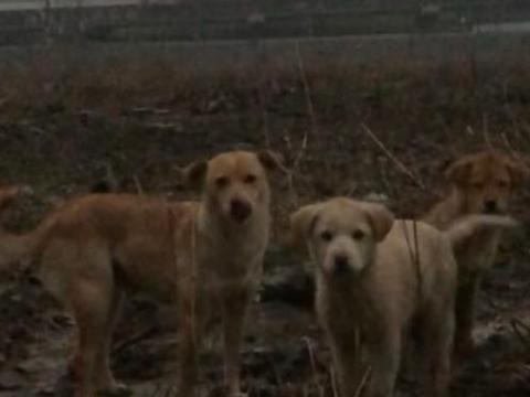 伟大的母爱,网友将小狗麻木,逃跑的母狗听到小狗的尖叫