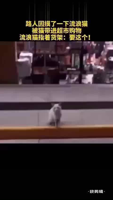 路人因摸了一下流浪猫,然后被猫带进超市购买猫粮……