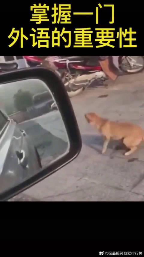 需要沟通很很重要,果然是好狗!!!