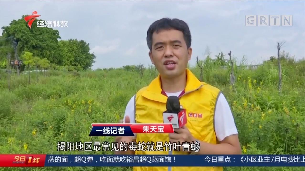 """揭阳:毒蛇出没!河边散步,小心""""竹叶青""""频伤人!"""