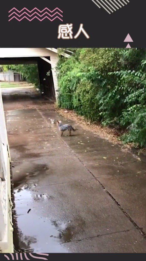 小狗Hazel把小流浪猫领回家,它用眼神征求了主人的同意