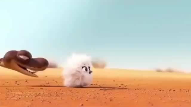 一部超级治愈的动画短片《兔耳袋狸》……