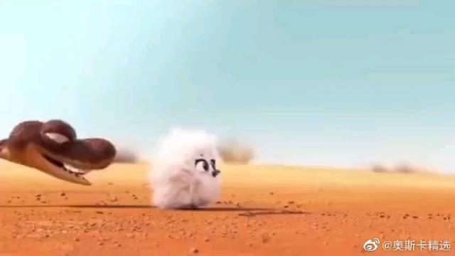 第91届奥斯卡最佳动画短片奖《兔耳袋狸》……