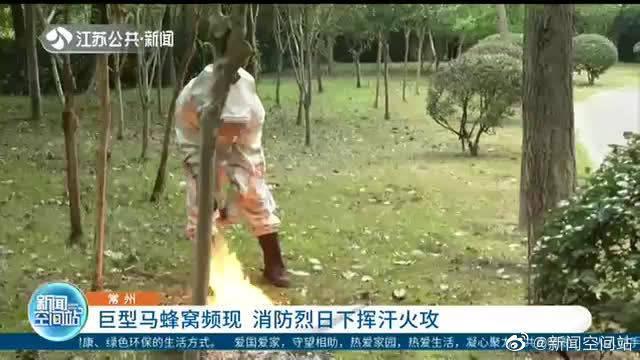 巨型马蜂窝频现 消防烈日下挥汗火攻