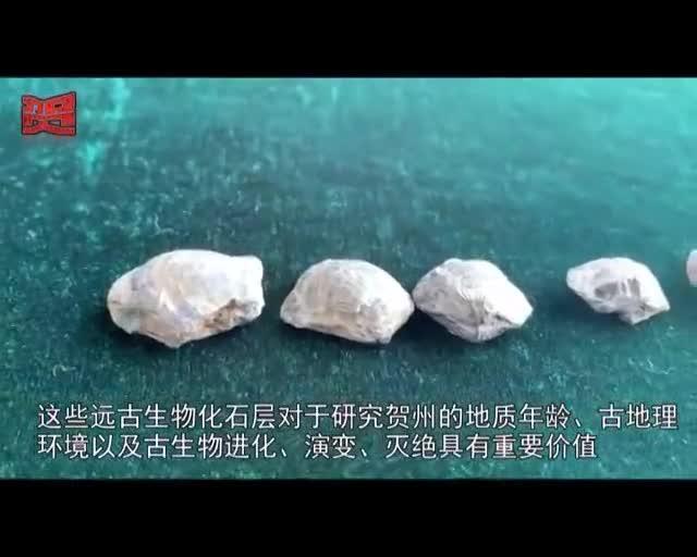 贺州市惊现古生物化石层