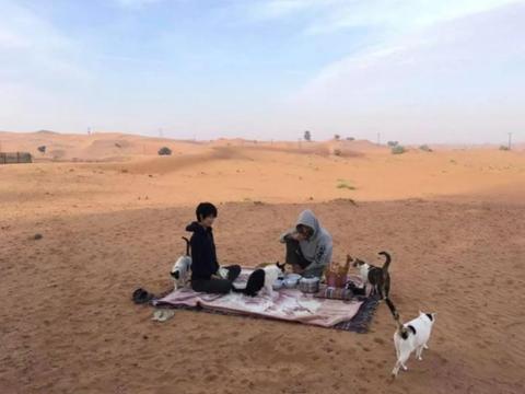 女子带着爱猫远嫁中东,却把沙漠比作猫砂盆,10年来养了一大群猫
