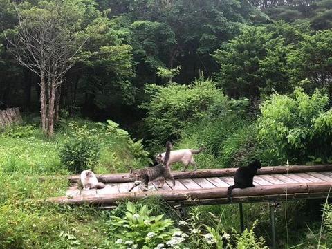 网友家的猫咪把森林当自家后花园可劲儿撒欢,这画面好像童话故事