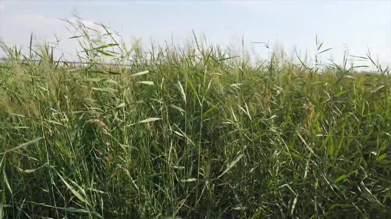 【黄河两岸是我家】惠农区迎河湾湿地公园:碧水蓝天鸟翩跹