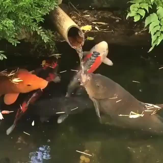 一条对水流有迷之执着的鱼