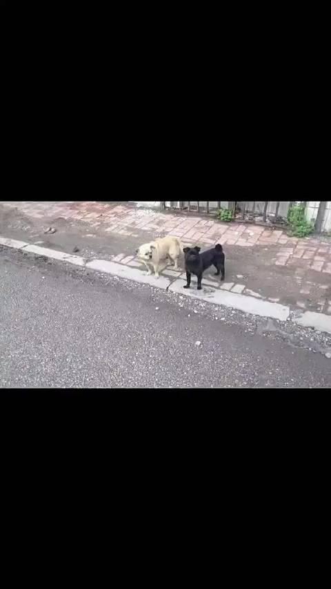 情侣跟狗子撞衫后