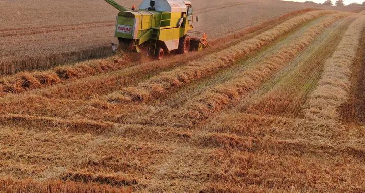 德国迎农作物丰收季!收割机田野作业忙