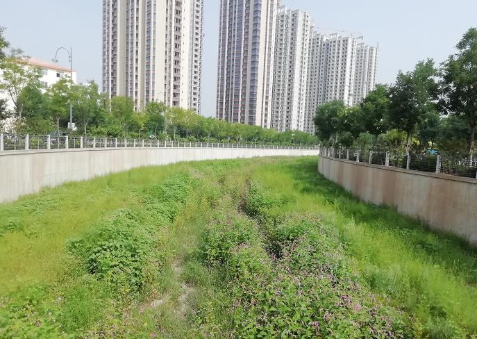 九院沙河沿岸,绿树、植被、高楼相映构成一幅都市美景图。