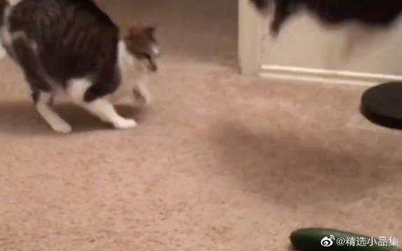 猫咪被吓到飞起,喵咪届顶级跳高选手