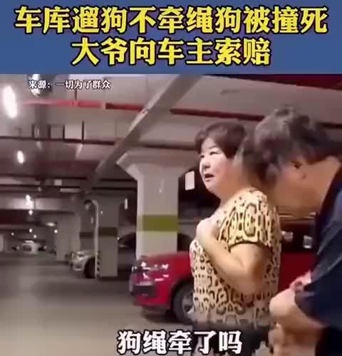 车库遛狗不拴绳狗被撞死,你觉得车主该赔吗?