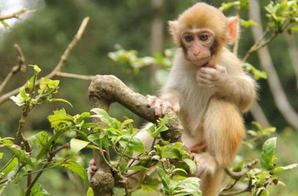 属猴人的绝配情侣,一生不离不弃,儿孙后代富贵满堂!