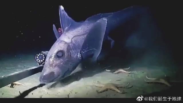 深海鲨鱼,像极了电影中的生化动物,你们感受下