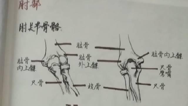 当代国画家徐鹤~校考线描教程:上肢衣纹肘部(肘关节骨骼)