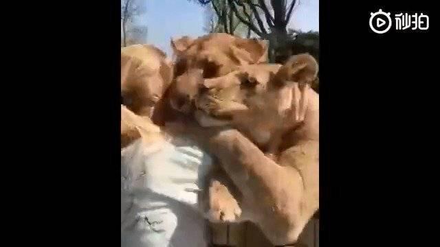 一位瑞士女士曾经养了一对狮子幼崽。当它们长大后……