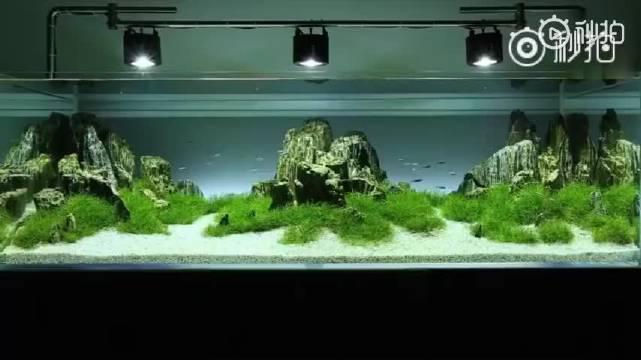 简约雅致自然水景缸,白沙、绿草、青石,静心、怡情、养眼