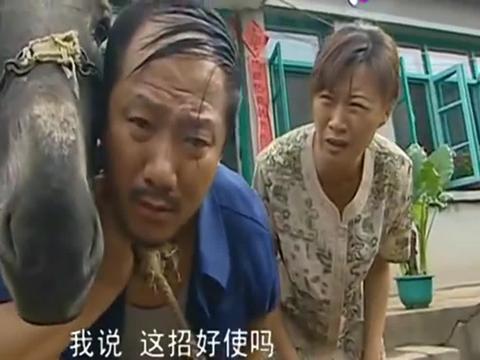 乡村爱情:广坤听说驴叫能治耳聋,在家拽着驴头不松手,贼逗