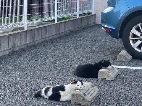 网友发现流浪猫特喜欢停车场的水泥墩,原来那是它们的太阳能枕头