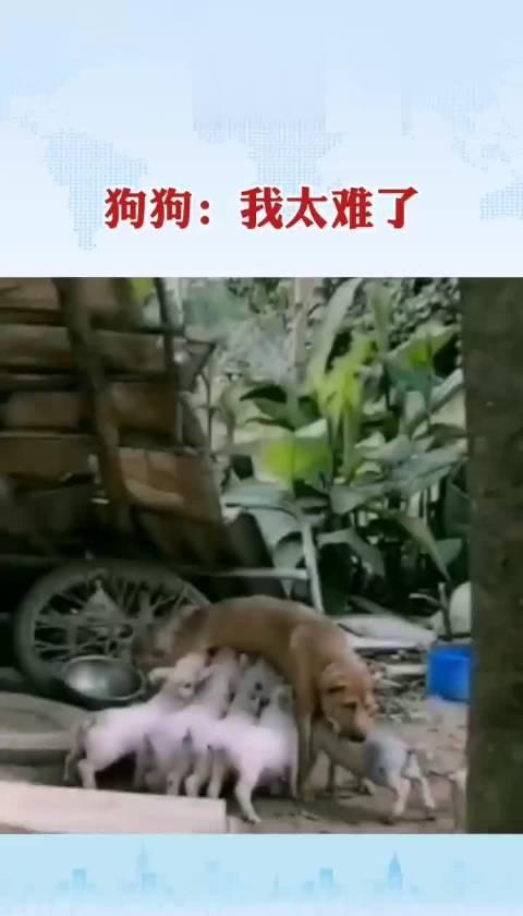 狗狗:我太难了