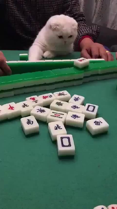 认真学习打麻将的