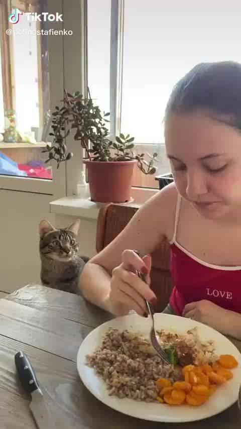 猫咪跟主人讨吃的,这小表情太可爱了吧!
