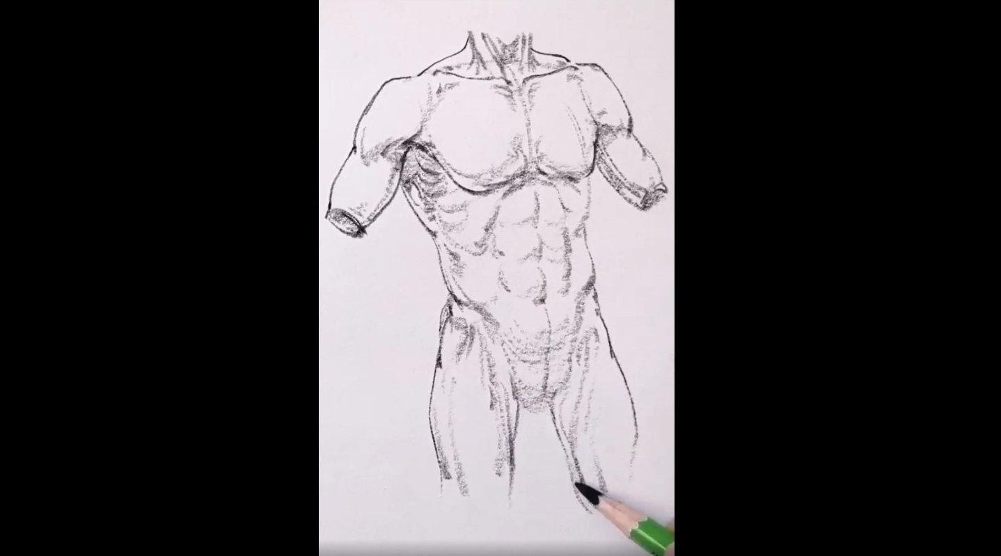 速写人体胸廓结构,看着陌客老师的步骤跟着学,你还觉得难吗