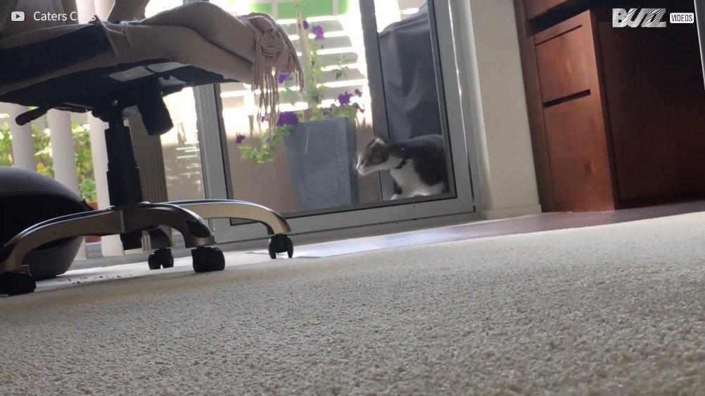 猫咪为了从阳台进屋,把门都拆了...太硬核了....