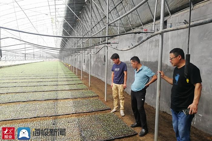泰安市农科院为蔬菜产业发展注入科技动力