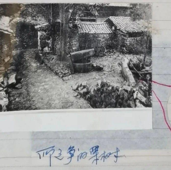 41年后,开棺验尸鉴别真凶!浙江警方破获全省年代最久远的命案积案