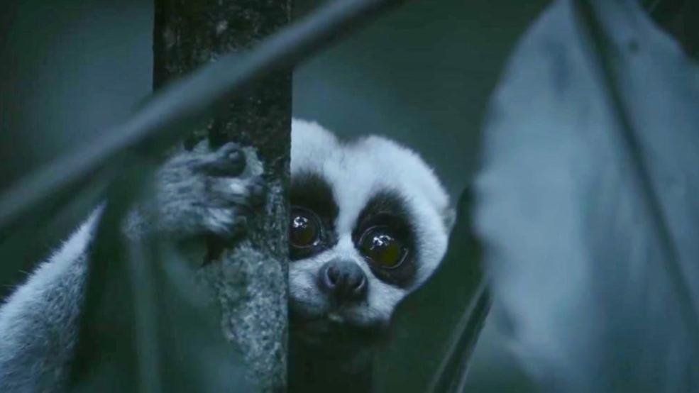超乎想象!丛林里的这些小生物,身上竟然藏着这么多秘密