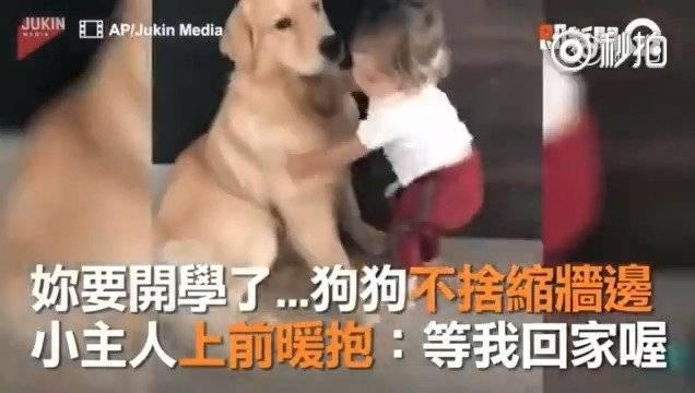 与狗狗终日相伴的小主人到年龄要去上学了……