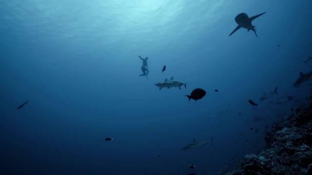 当自由潜水与海底精灵不期而遇,也许这才是自由潜水迷人的地方
