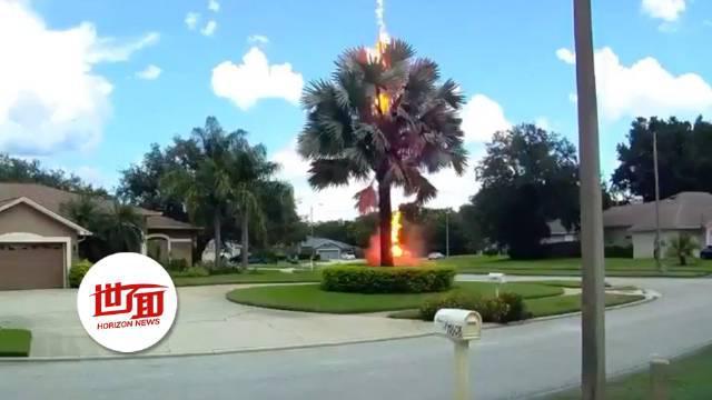 晴空万里惊现一道闪电 直接劈中大树火花四溅