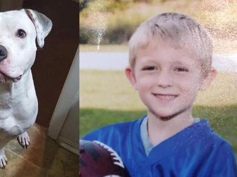 狗狗护食:男童被比特犬严重咬伤,【第一猛犬】不是谁都可以驾驭