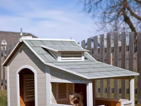 国外小哥救助两只流浪猫,还贴心的为其盖了房子,网友:这别墅牛